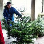 Bioweihnachtsbaumverkauf