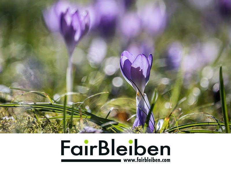 Frühlingsblumen mit FairBleiben Logo